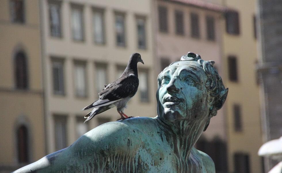 google pigeon1